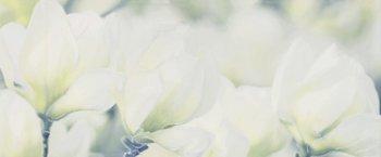 Rapsodia olive decor 01 -17090