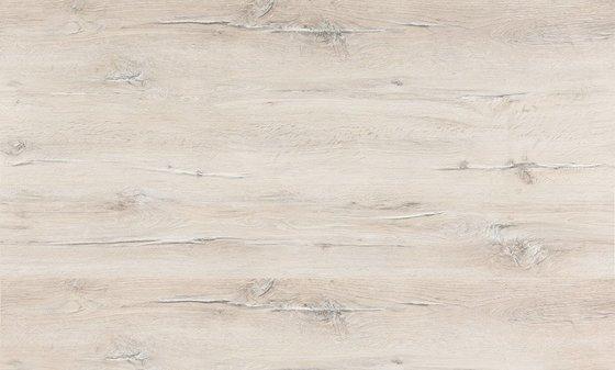 Дуб Поллино - главное фото