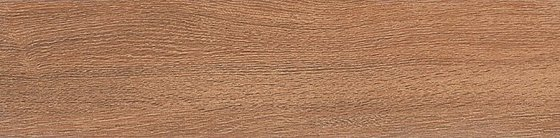 Вяз коричневый - главное фото