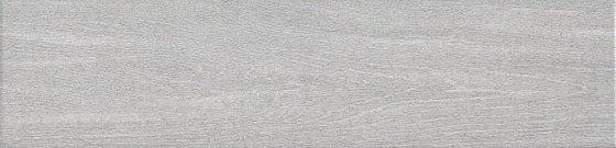 Вяз серый - главное фото